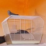 Handelsüblicher Vogelkäfig
