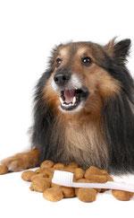 Hunde Zahnflege