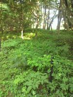 清戸の泉付近の林
