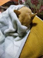 寝たいのにまぶしい〜