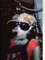 Бати - полярный пес