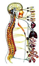 правильный выбор матраса, здоровье, здоровый организм
