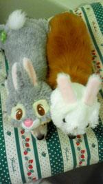 ウサギのノアとシエル