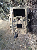Keepguard una trailcam que cumple las expectativas