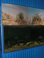 Tirschenreuth Fischerei- und Teichmuseum
