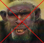 no more apeman