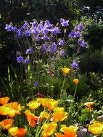 Maison Bidaletenia - Chambre d'hôtes au Pays Basque - Jardin - Pavot de Californie