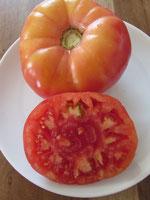 Paprikaförmig, flachrunde, rote Früchte. Bild Bio Gärtnerei Kirnstötter