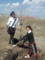 Mongolian children planting seedlings