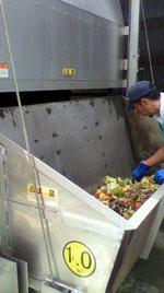 搬送した生ゴミ内に異物がないか手作業で分別する
