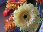 Eigentlich auch schön: Blumen