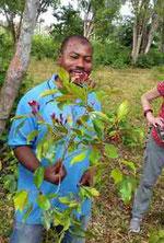 Zanzibar Spice Tour - wo Pfeffer, Vanille und Gewürznelken wachsen.