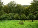 Land-Art Halbrund im Grün