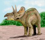 Bild eines Nedoceratops
