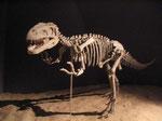 Skelett eines Gasosaurus