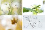 Eschmarer Naturfototreff - 2021 Die Welt der Bäume