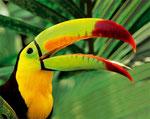 Curapacao sinnliche Erlebnisreise durch den Regenwald