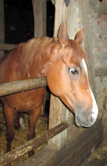 Lieblingspferd meiner Tochter