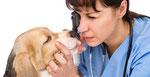 PERRO ENFERMO: Presionar en foto para ver causas. Diagnosticar por veterinario.