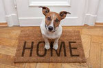 Alquileres con mascotas en A Coruña desde 300 € clickando.