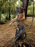 Perros linchados...