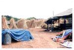 Secado de la palmera de rattán en Indonesia