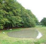 Im Herbst 2009 neu angelgtes Kleingewässer am Rand des 'Fledermauswaldes'.
