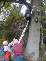 Mit vereinten Kräften und der Hilfe eines Flaschenzuges wurde eine rund 30 kg schwere Fledermaus-Überwinterungshöhle ausgetauscht. Zum Vergrößern bitte auf das Bild klicken.