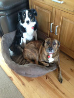 """""""Get out of my basket,"""" said Pebbles to Jess the collie."""