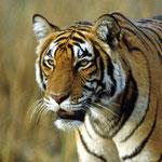 Photo WWF