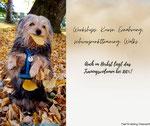 hundetraining salzburg, hundeschule salzburg, hundetraining september 2020, hundekurse herbst 2020, mobile hundeschule, hundetraining, tiertraining diamant, welpentraining, junghundekurse, futterberatung, workshop hund, salzburg, österreich, bayern