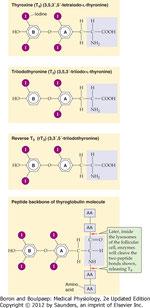 Структура Т4, T3, и rT3.