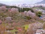 (花見山公園から福島市内)