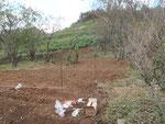 チューリップを植えた場所
