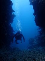 石垣島でのんびりダイビング「浜島北のケーブポイント」