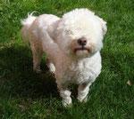 Hund ohne Augen