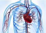 Naturheilpraxis Ralf Drevermann Hamm - Krankheit: Durchblutungsstörungen