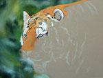 Tiger-Pastell-Zeichnung