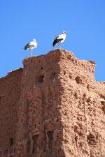 Kasbah des cigognes à Ouarzazate