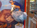Dodo im Naturkunde Museum in Port Louis, der Hauptstadt von Mauritius