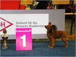 VDH-Europasieger Ausstellung 2014