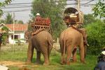 Elefanten im Garten