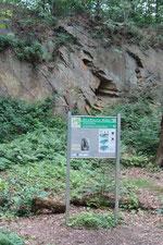 In der Steinbruchwand sind Hohlräume ehemaliger Drifthölzer zu entdecken, Foto: E. Klein