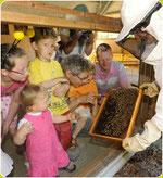 un homme montre l'intérieur d'une ruche à des enfants