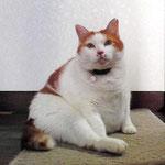 先住猫チャッピー