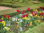 De nuestro jardín