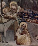 Artista: Giotto di Bondone anno 1304 - 1306