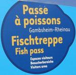 Besucherzentrum Fischtreppe Staustufe Gambsheim/Rheinau
