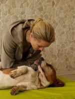 Verhaltensberatung Hund