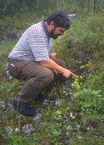 Der Autor zeigt die Jovibarba am Lochen. Foto: Gérard DUMONT